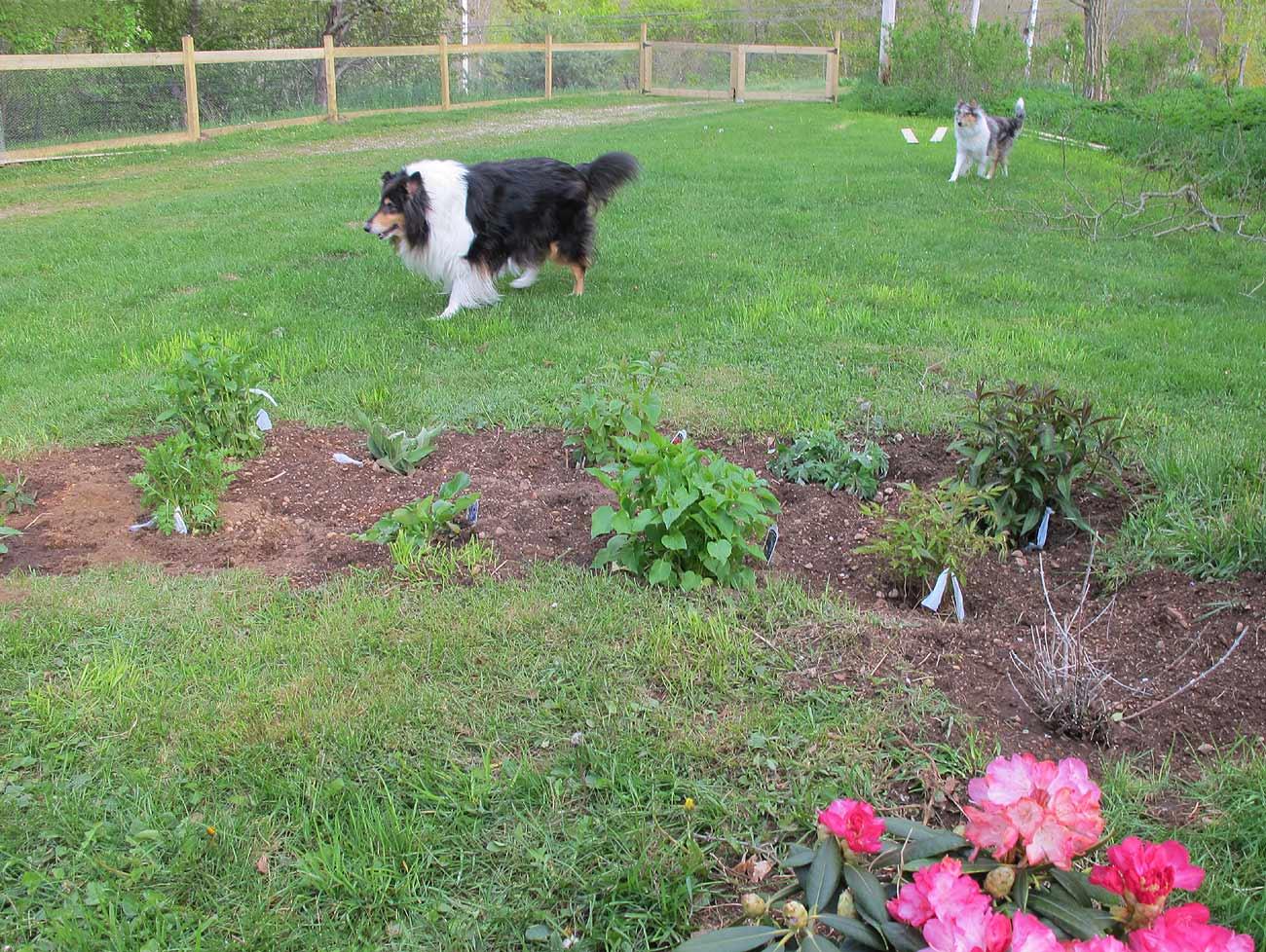 Dog Fence Yard How To Make Fence