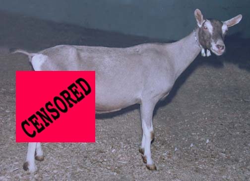 [Image: censored-goat.jpg]