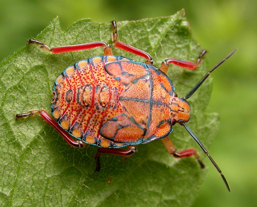 ugly insects with images kazcreatures storify